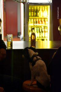 Hund am Tresen im Parkclub